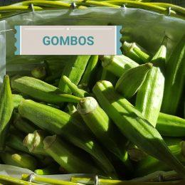 Gombos antilles