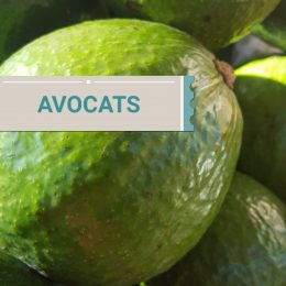 Avocats BRESIL ou ST- DOMINGUE
